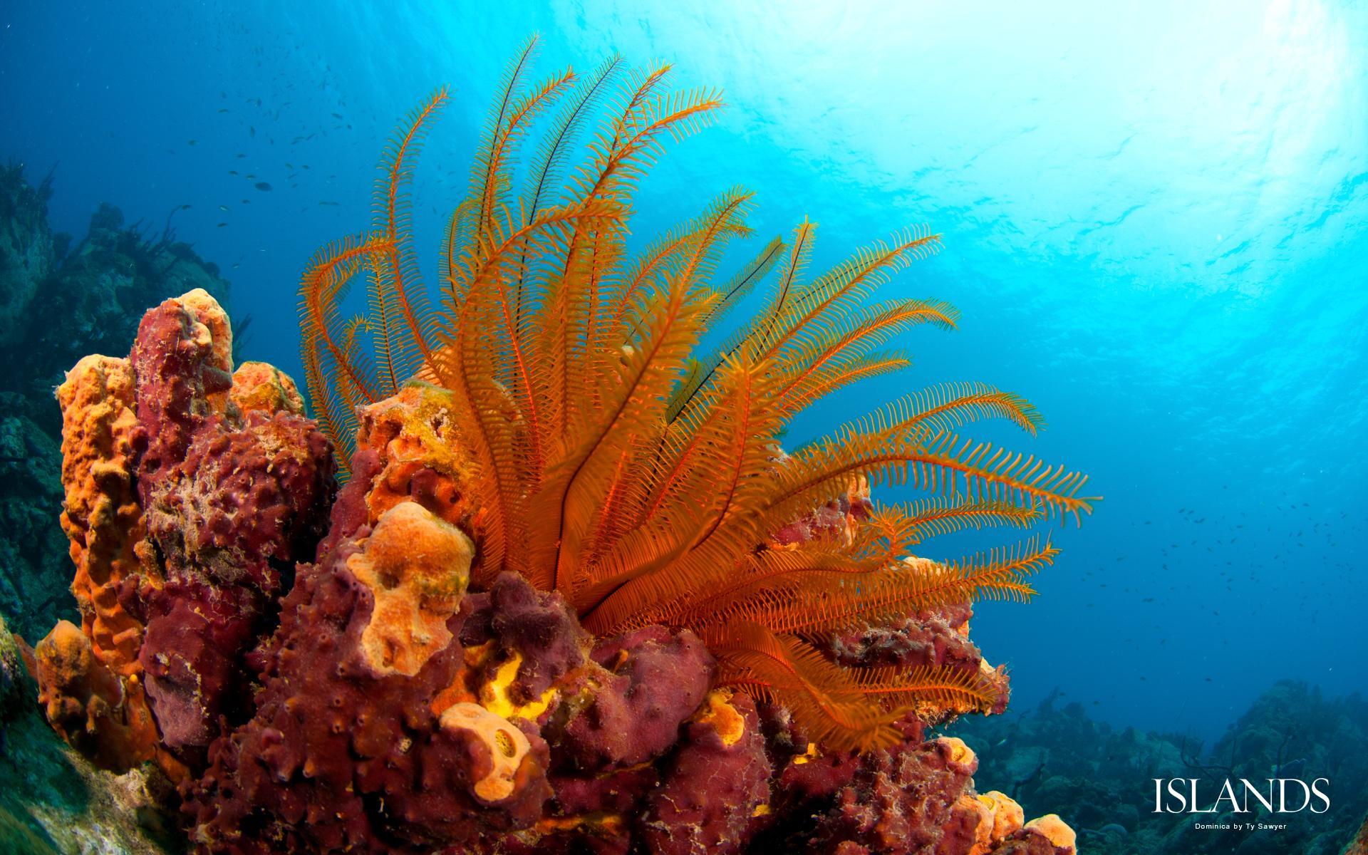 dominica background diving snorkeling caribbean desktop wallpaper 1920x1200