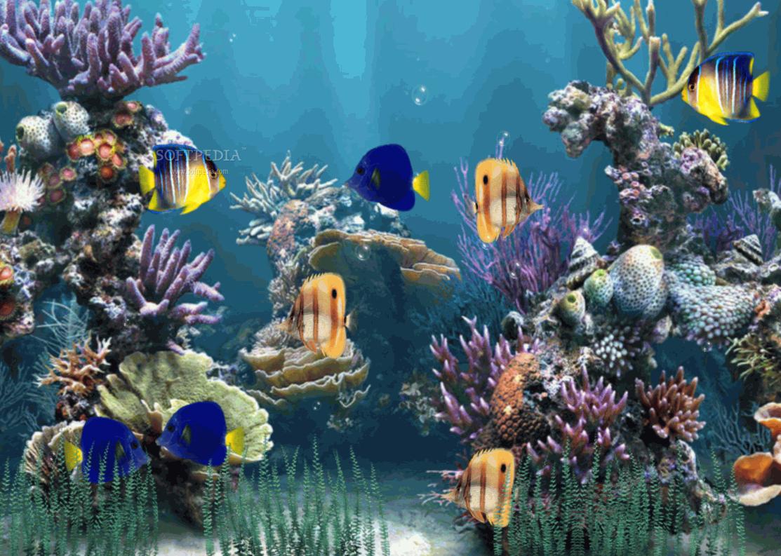 49 Free Animated Fish Aquarium Wallpaper On Wallpapersafari