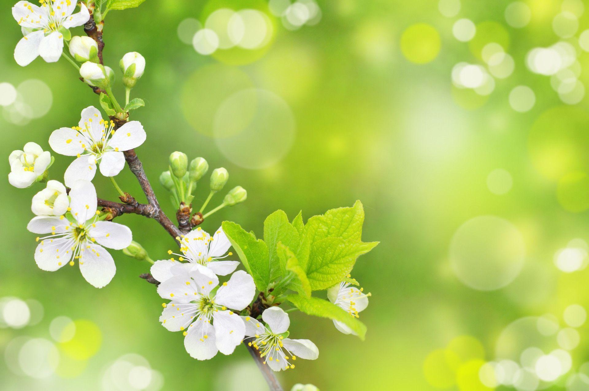 Spring Backgrounds Desktop 1920x1275