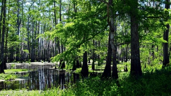 swamps 1920x1080 wallpaper Landscapes Wallpapers Desktop 600x337