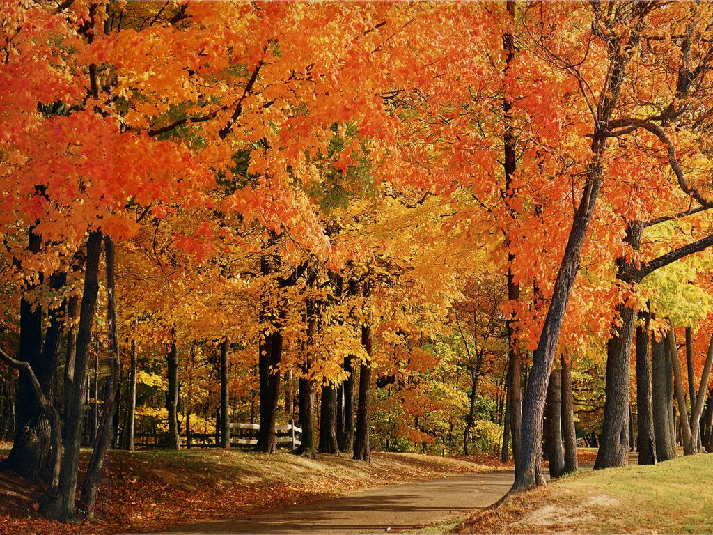Indiana Park County Trees   Nature Wallpaper Image featuring Autumn 1024x768