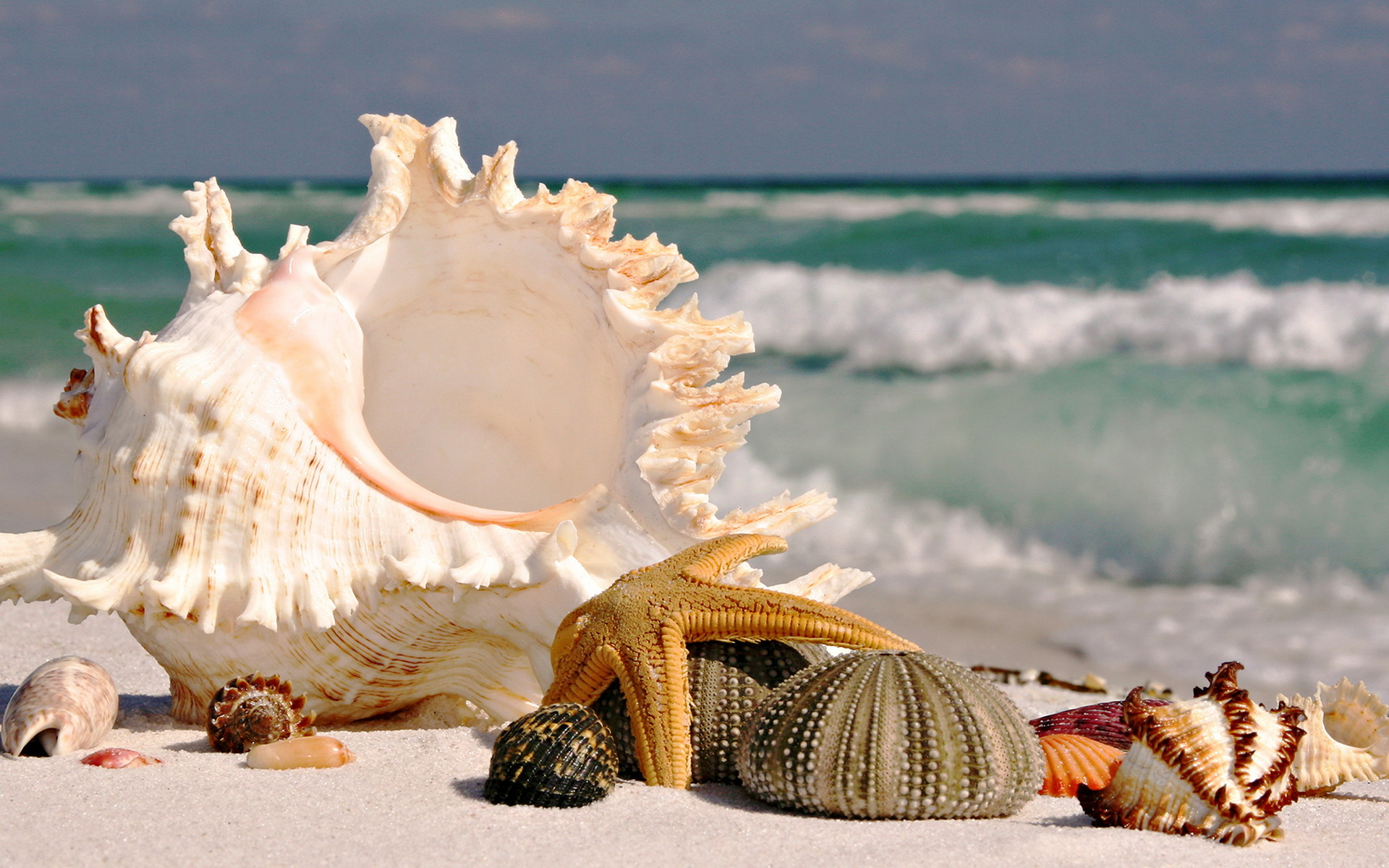 Beautiful Shell Beach Wallpaper Themes 18645 Wallpaper 1920x1200