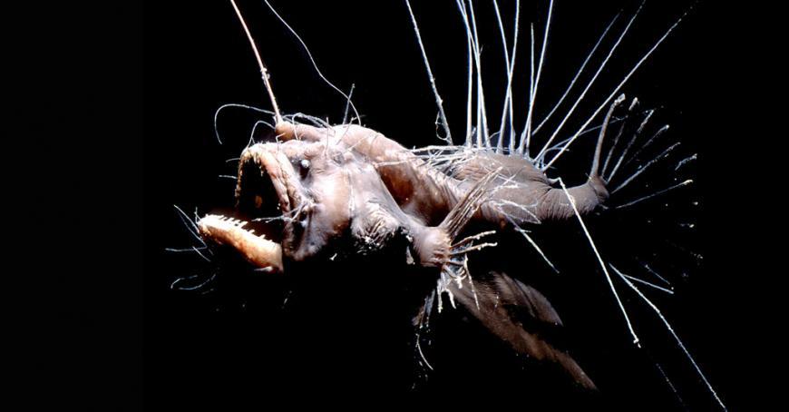 Weird Fish From The Deep 11