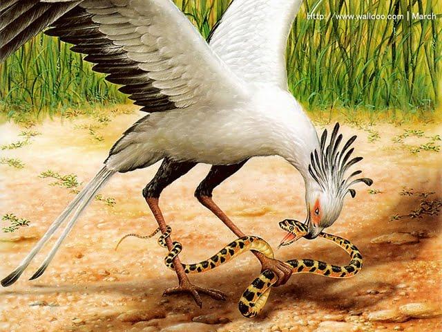 Socias Falcon Hunting The Snake Birds Painting Wallpaper Wallpaper 640x480