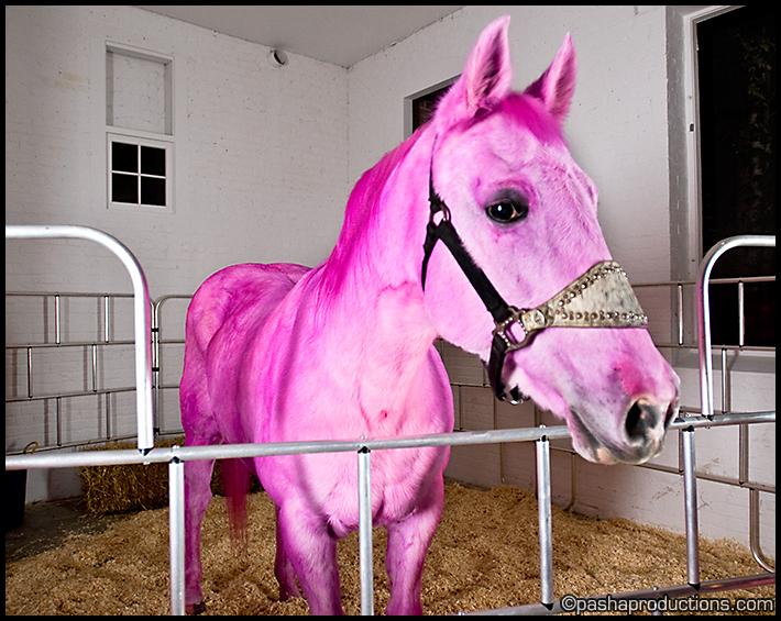 Pink Horse Wallpaper Wallpapersafari