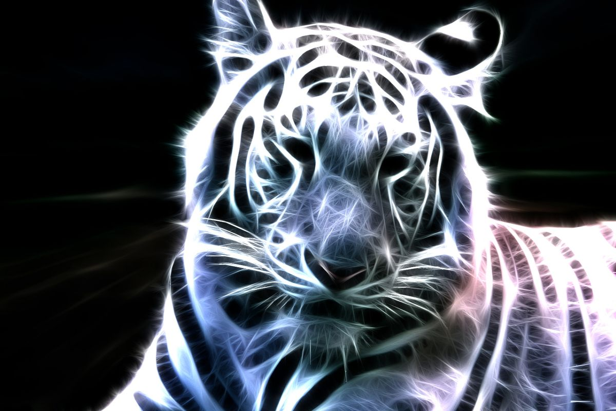 Neon Animal Backgrounds Download HD Wallpapers 1200x800