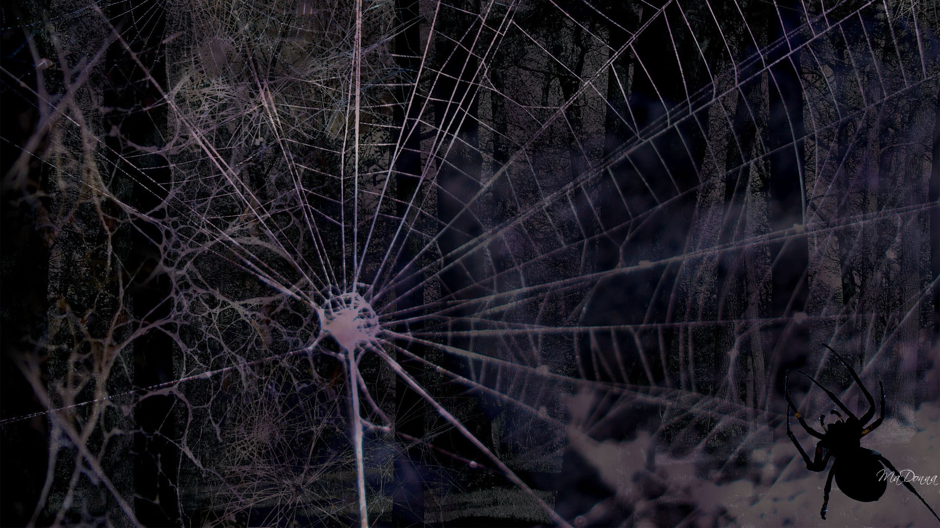 Download Scary Spider HD Desktop Wallpapers We select the best 1920x1080