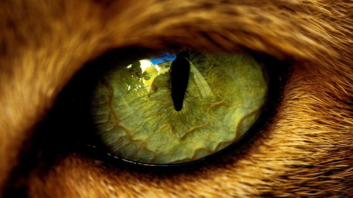 Download Wallpaper Big macro eye from a wild animal   HD wallpaper 688x387