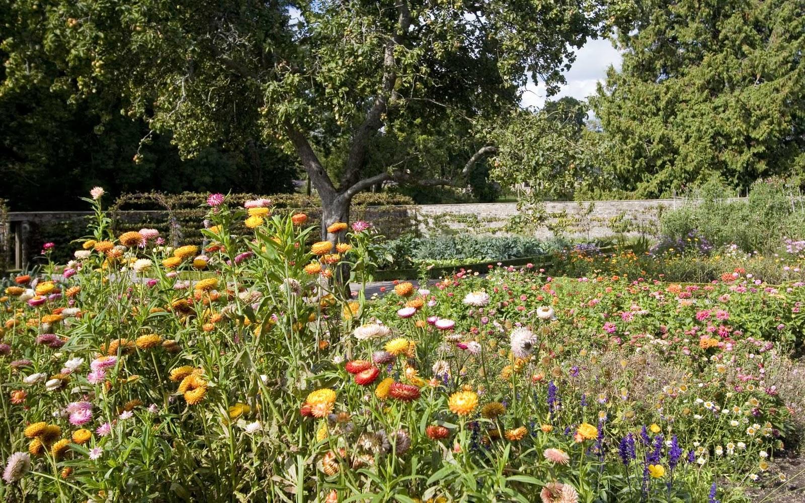 cartoon flower garden Wallpapers 1600x1000