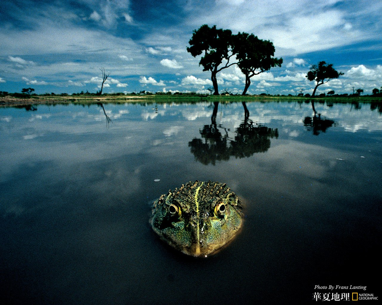 National Geographic Wallpaper Download: National Geographic Wallpaper Desktop