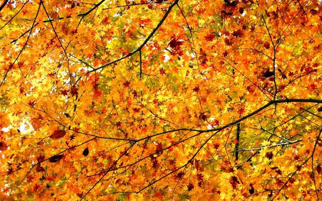 Wallpapers Provides  Original Autumn Fall Desktop Wallpapers For 630x394