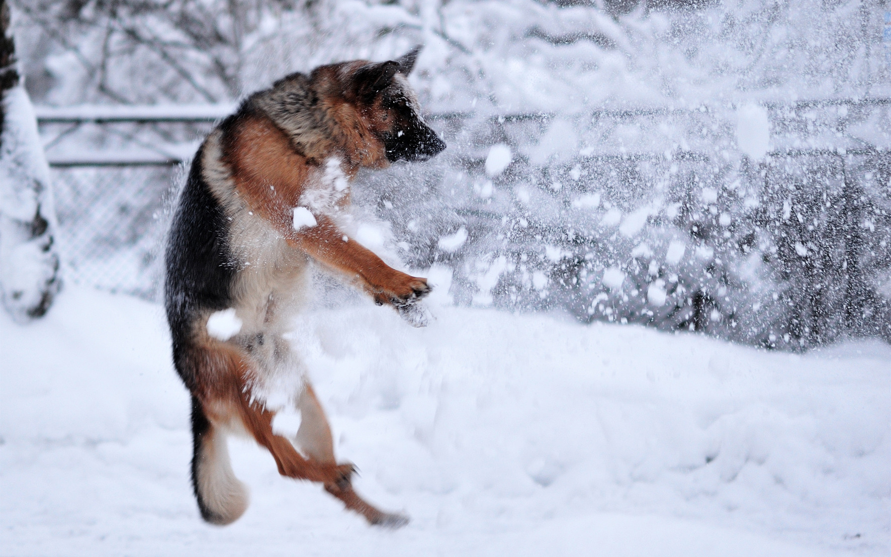 Dog, animal, dog, snow, white, winter