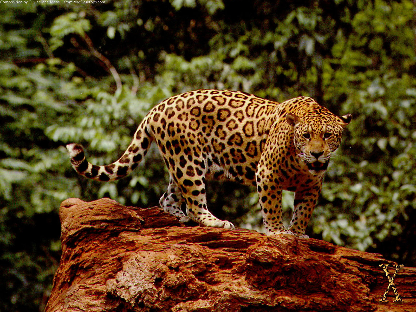 Great Jaguar Wallpapers HD Wallpapers 1600x1200