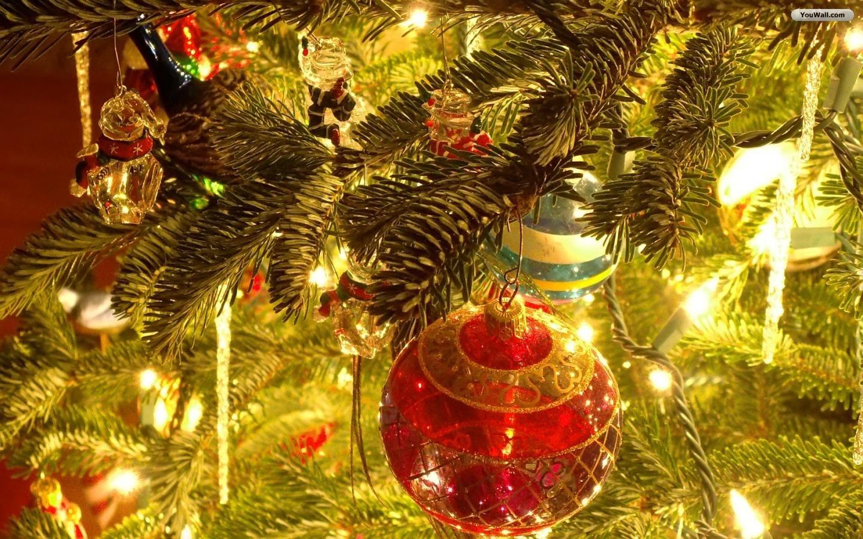19 Beautiful Outdoor Christmas Tree Hd Desktop Wallpapers Merry