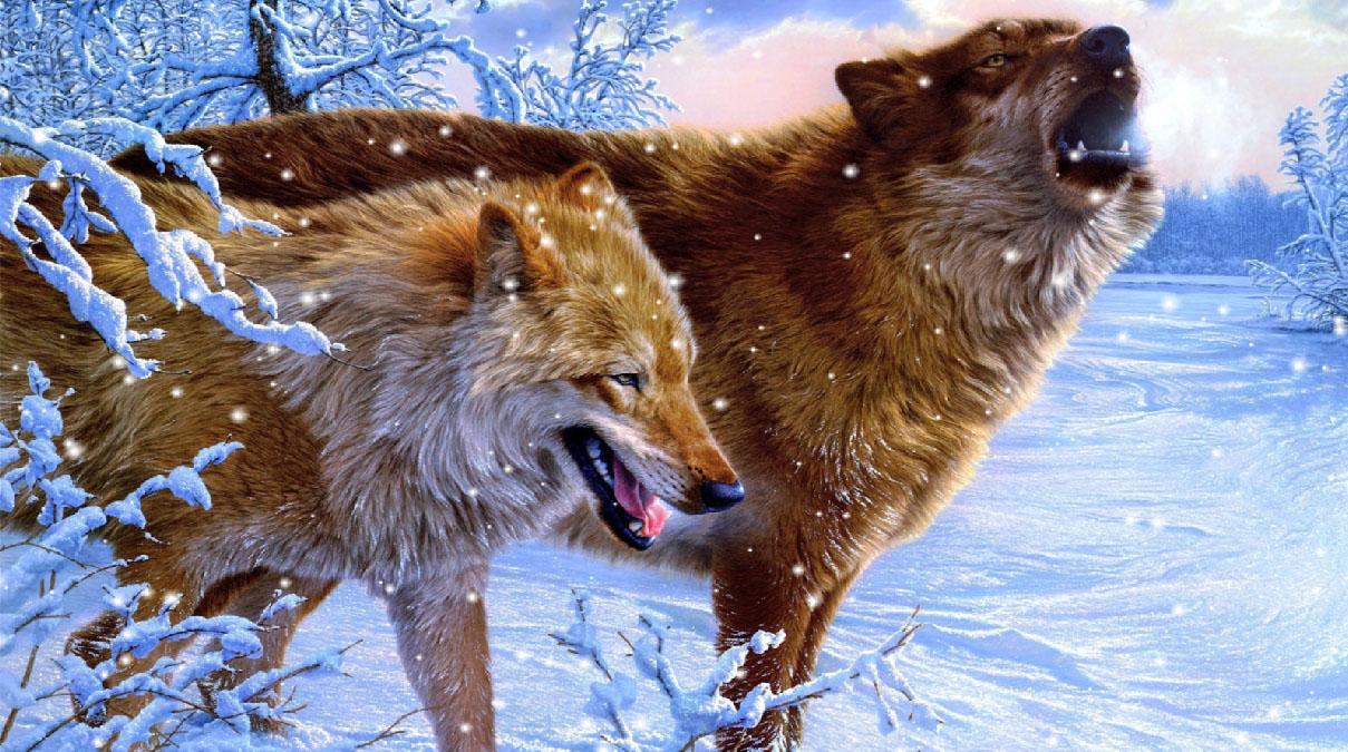 Moving wolf wallpapers wallpapersafari - Free animated wallpaper s8 ...
