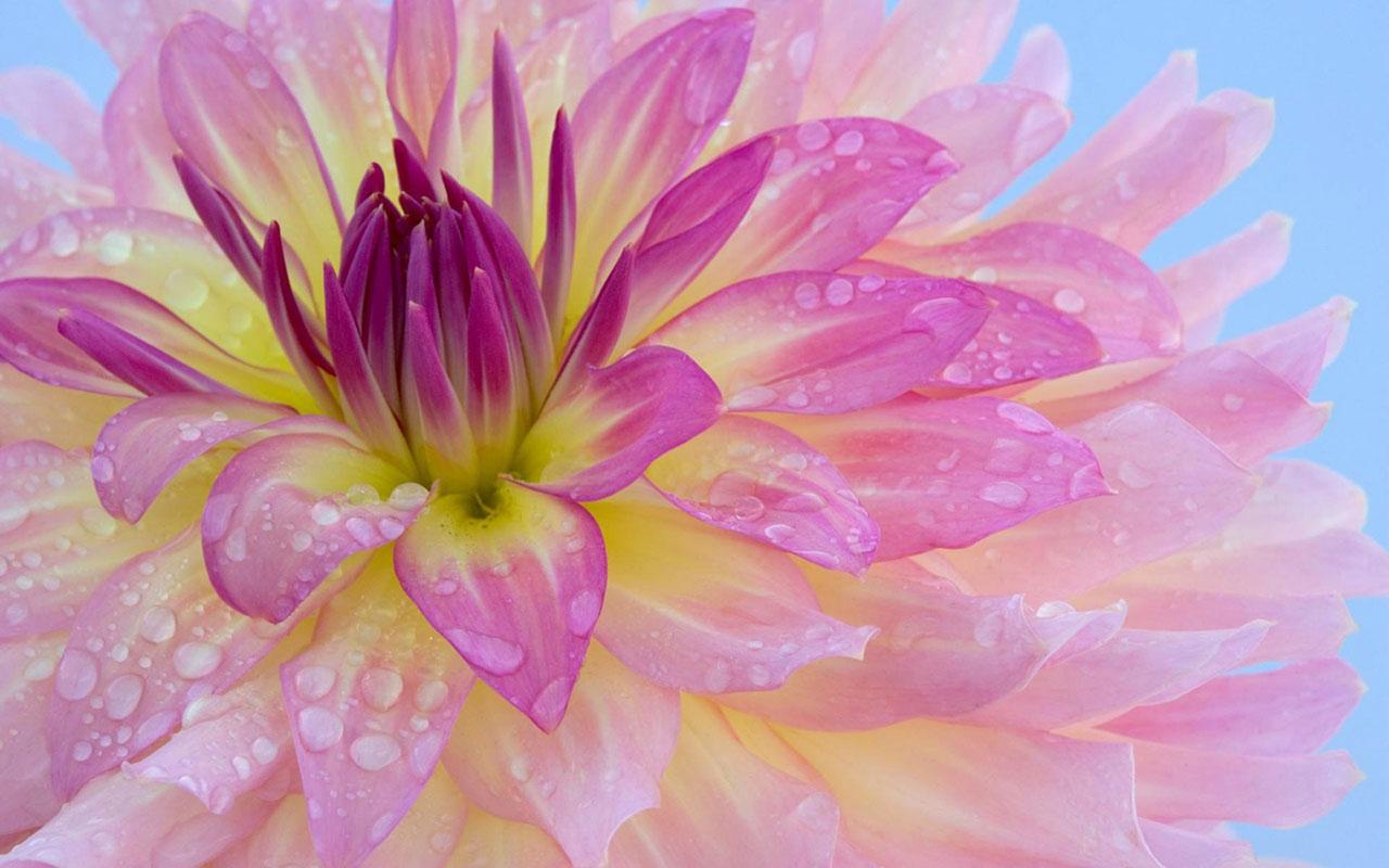 Charming feminine pink Flowers HD Wallpaper 2 Flower Wallpapers 1280x800
