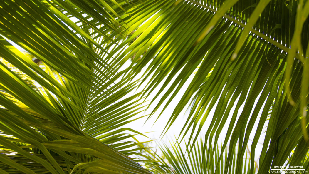 Desktop Tropical Leaf Wallpaper Pngtree offers hd tropical leaves background images for free download. desktop tropical leaf wallpaper