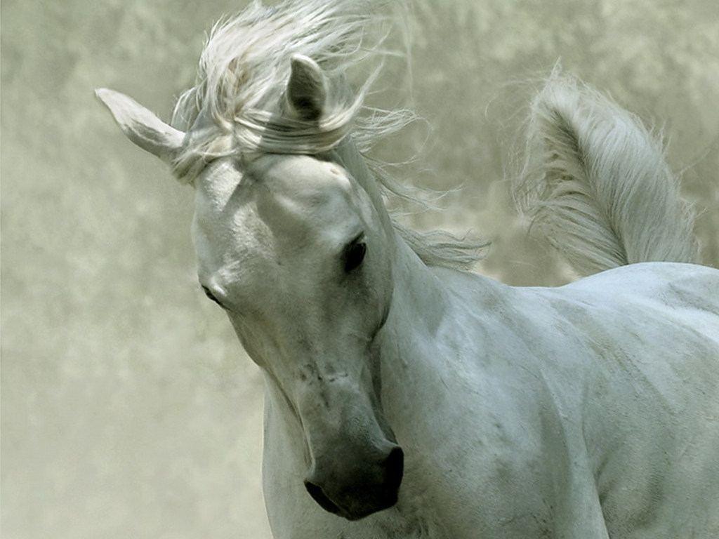 Unique Animals blogs Black Horses Black Horse Wallpapers for Desktop 1024x768