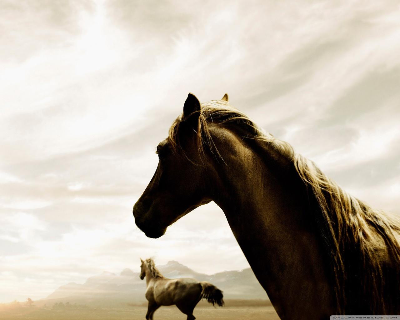 Horse 4K HD Desktop Wallpaper for 4K Ultra HD TV Wide Ultra 1280x1024