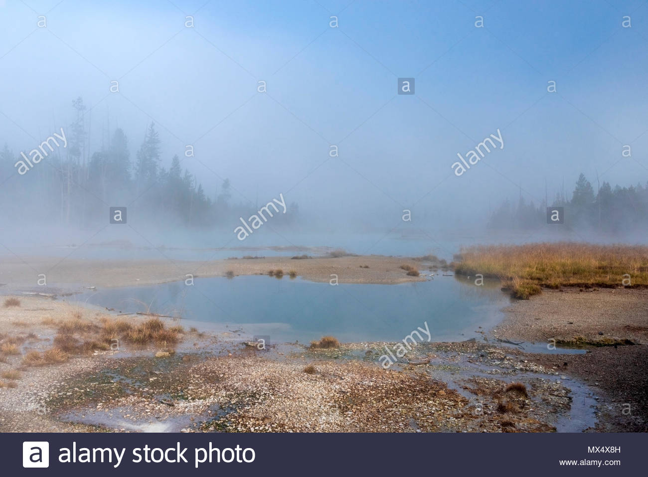 Geothermal hot spring with fog and steam and trees in the 1300x957