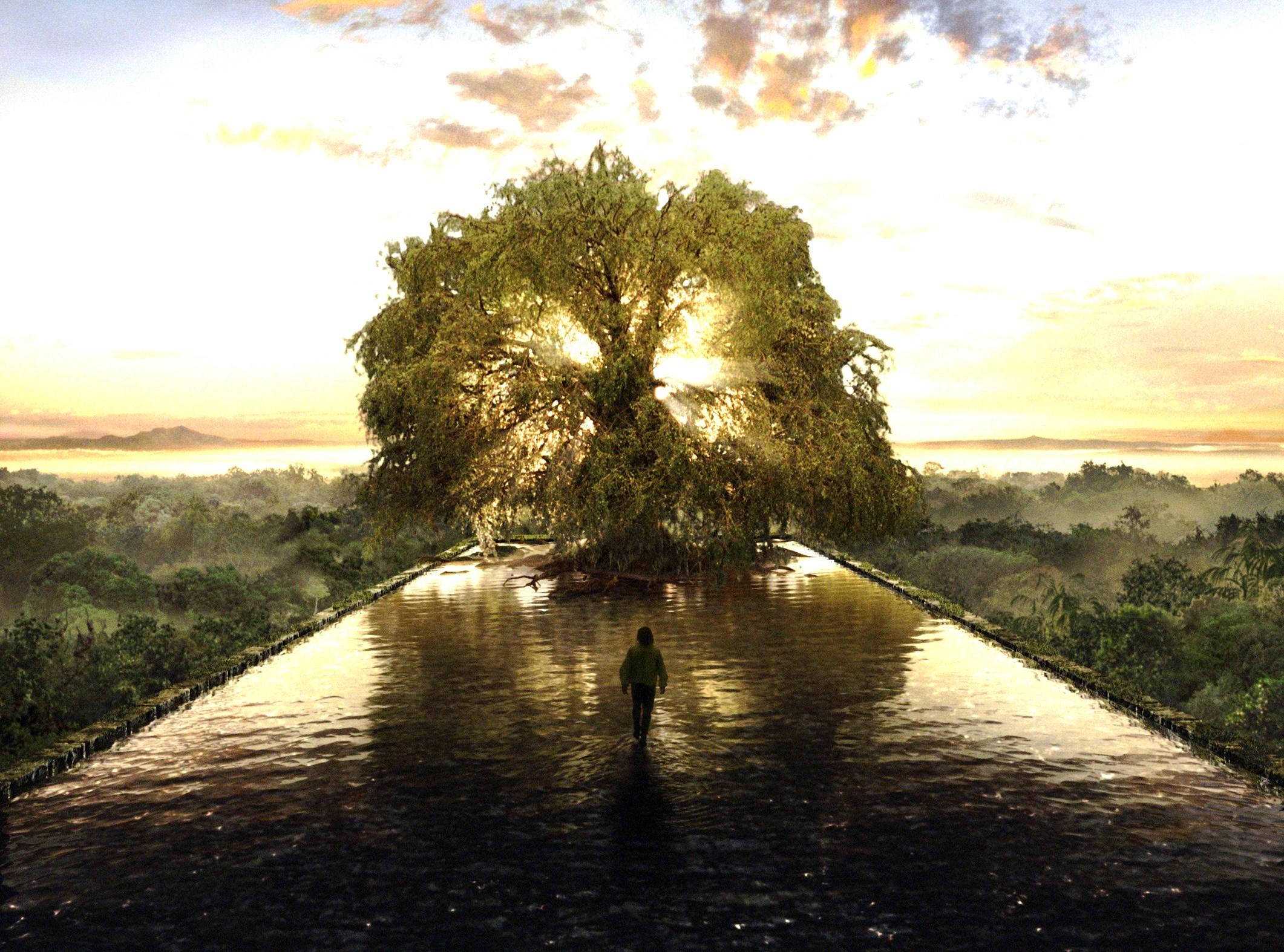 Trees With Water Wallpaper Wallpapersafari