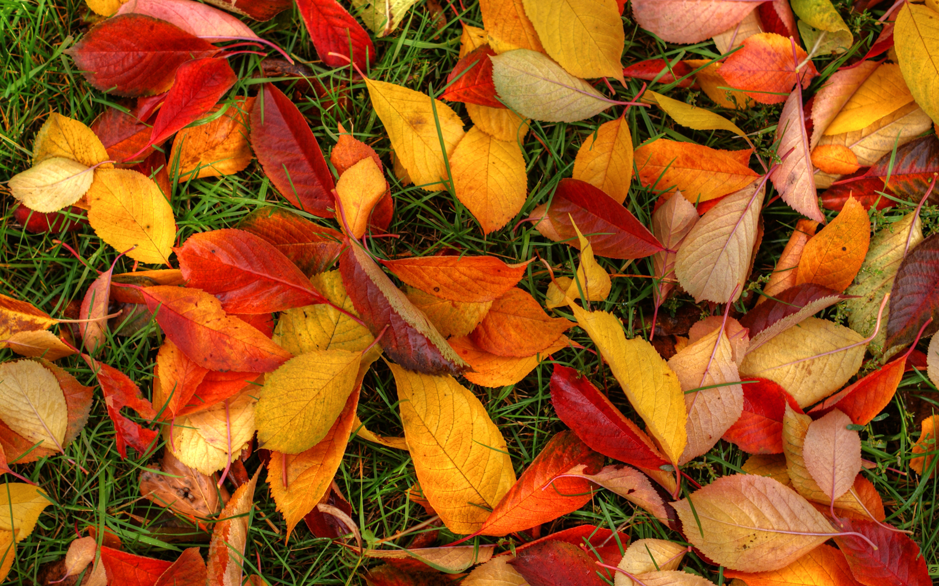 Autumn Leaves Wallpaper Hd Autumn leaves 1920x1200