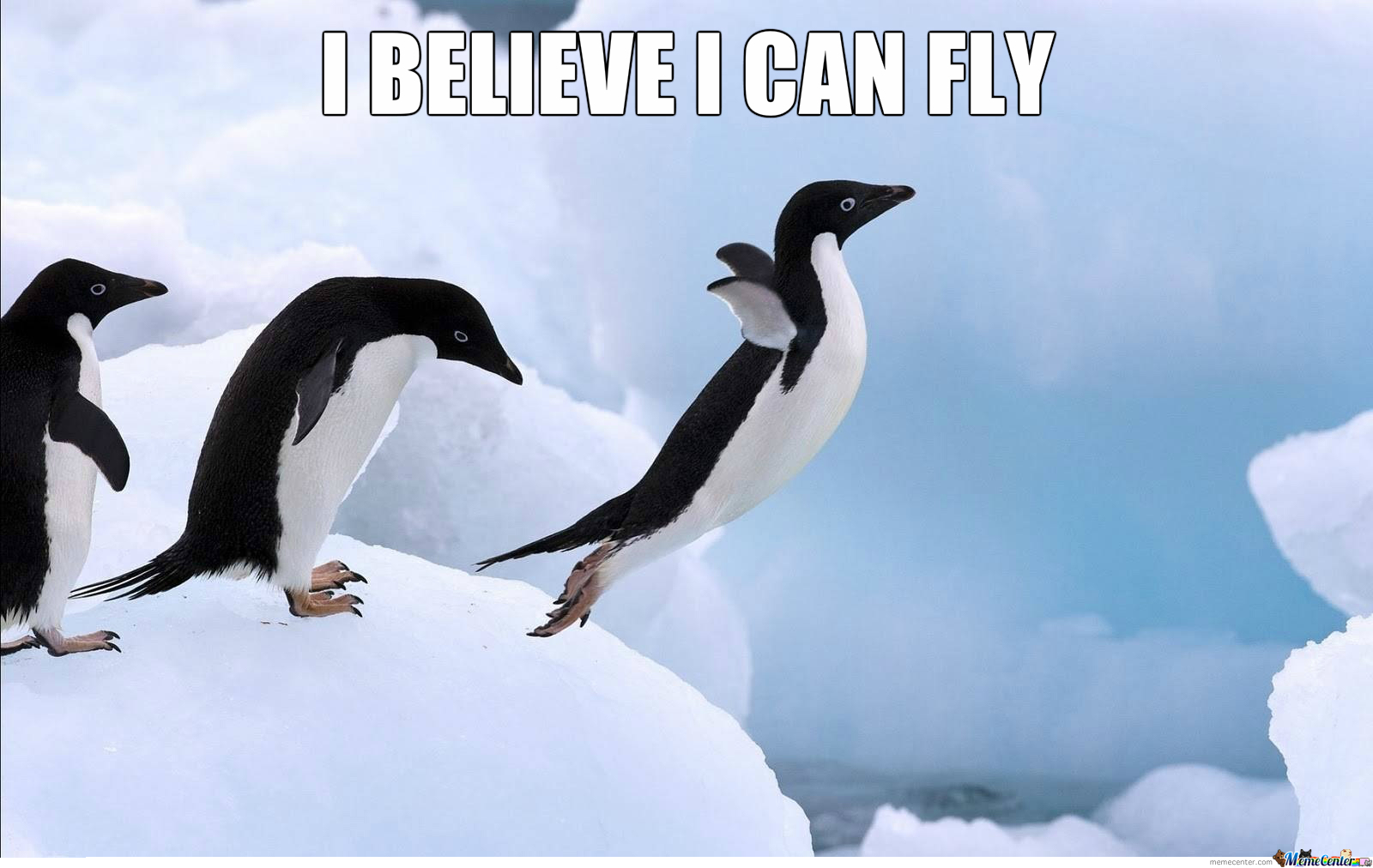 Penguins imagens pinguim believe He can Fly HD wallpaper and 1600x1012