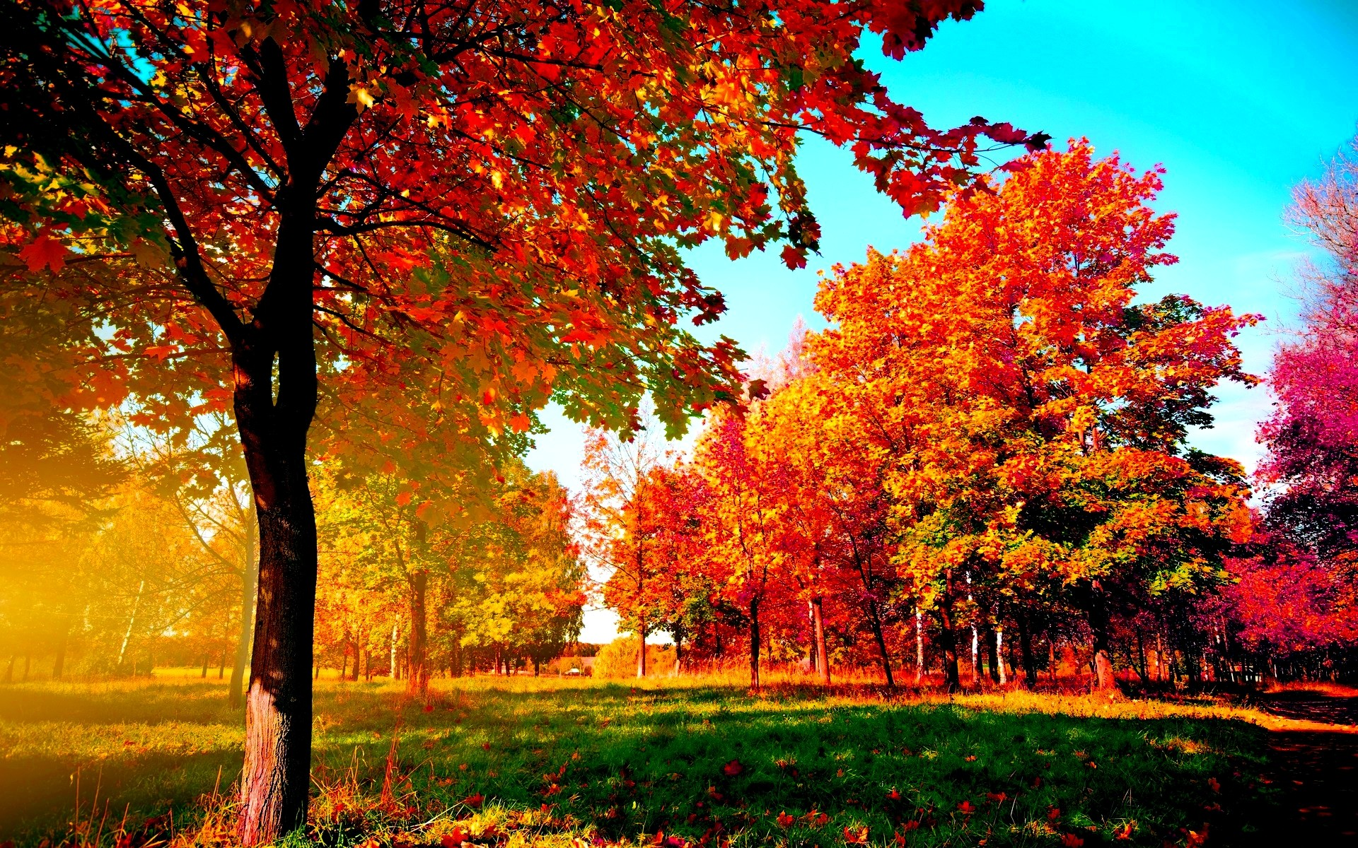 Fall Computer Wallpaper Backgrounds 64 images 1920x1200