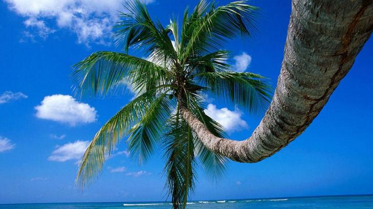 Tropical paradise   79281   High Quality and Resolution Wallpapers 728x408