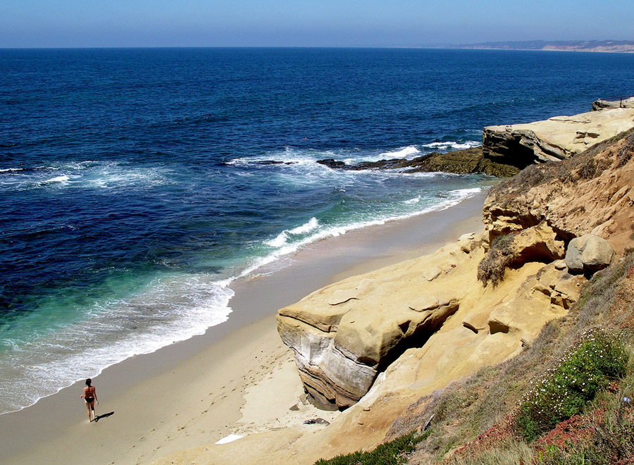 La Jolla Cove Pictures Photos of La Jolla Cove Surfing Seals 900x660