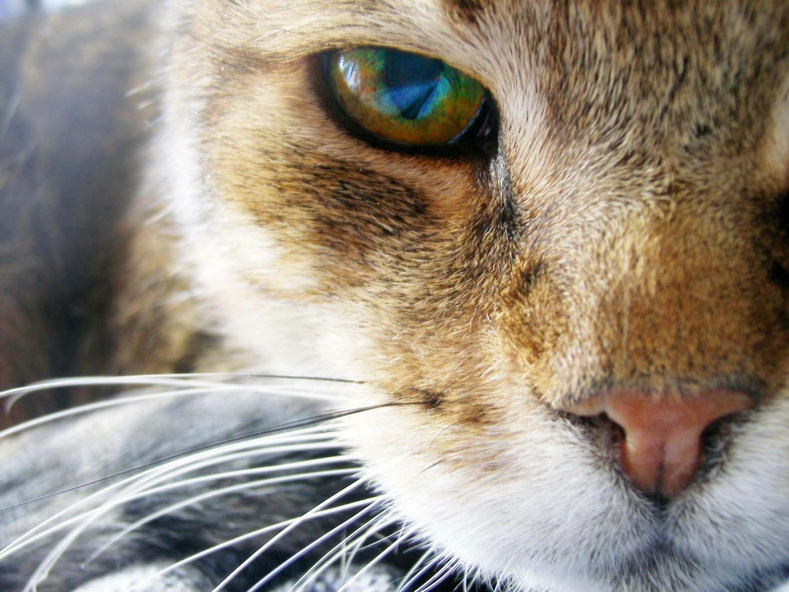 window 7 HD Wallpaper Animal HD Wallpapers 1600x1200