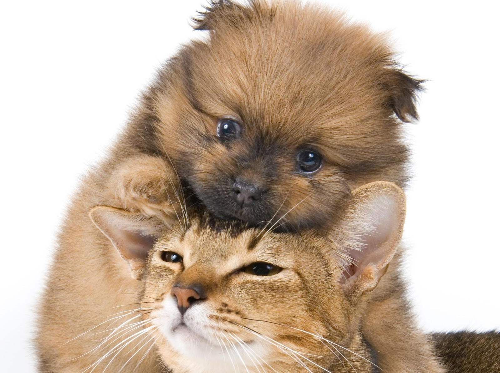 Cute Puppies And Kittens Wallpaper: Dogs And Cats Wallpaper