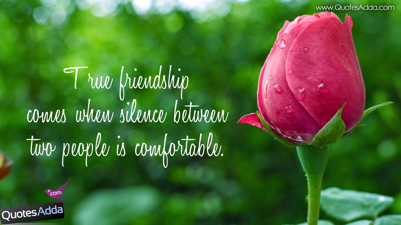 Best Friend Wallpapers Quotes - WallpaperSafari