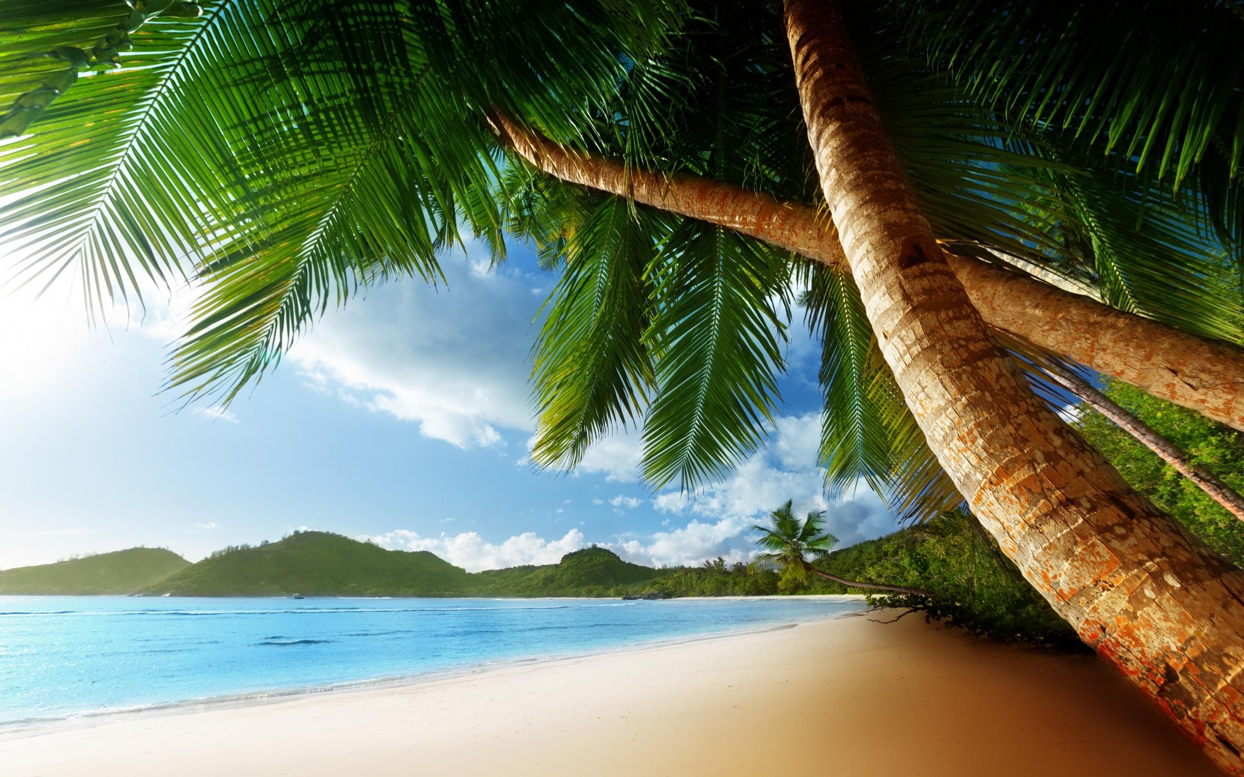 Tropical Palm Trees Beach Ocean Trees wallpaper 2560x1600 48637 2560x1600