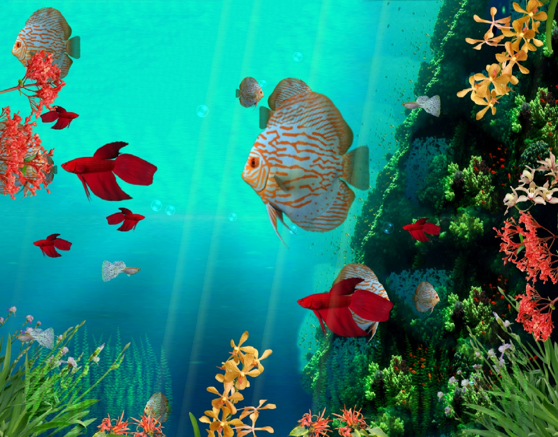 Coral Reef Aquarium Animated Wallpaper 1099x861