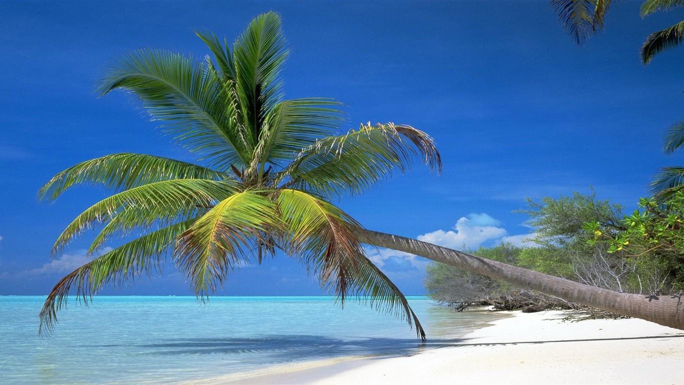 Palm tree desktop wallpaper wallpapersafari - Free palm tree screensavers ...