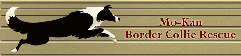 Puppies Dogs for Sale from Dog Breeders 770x180