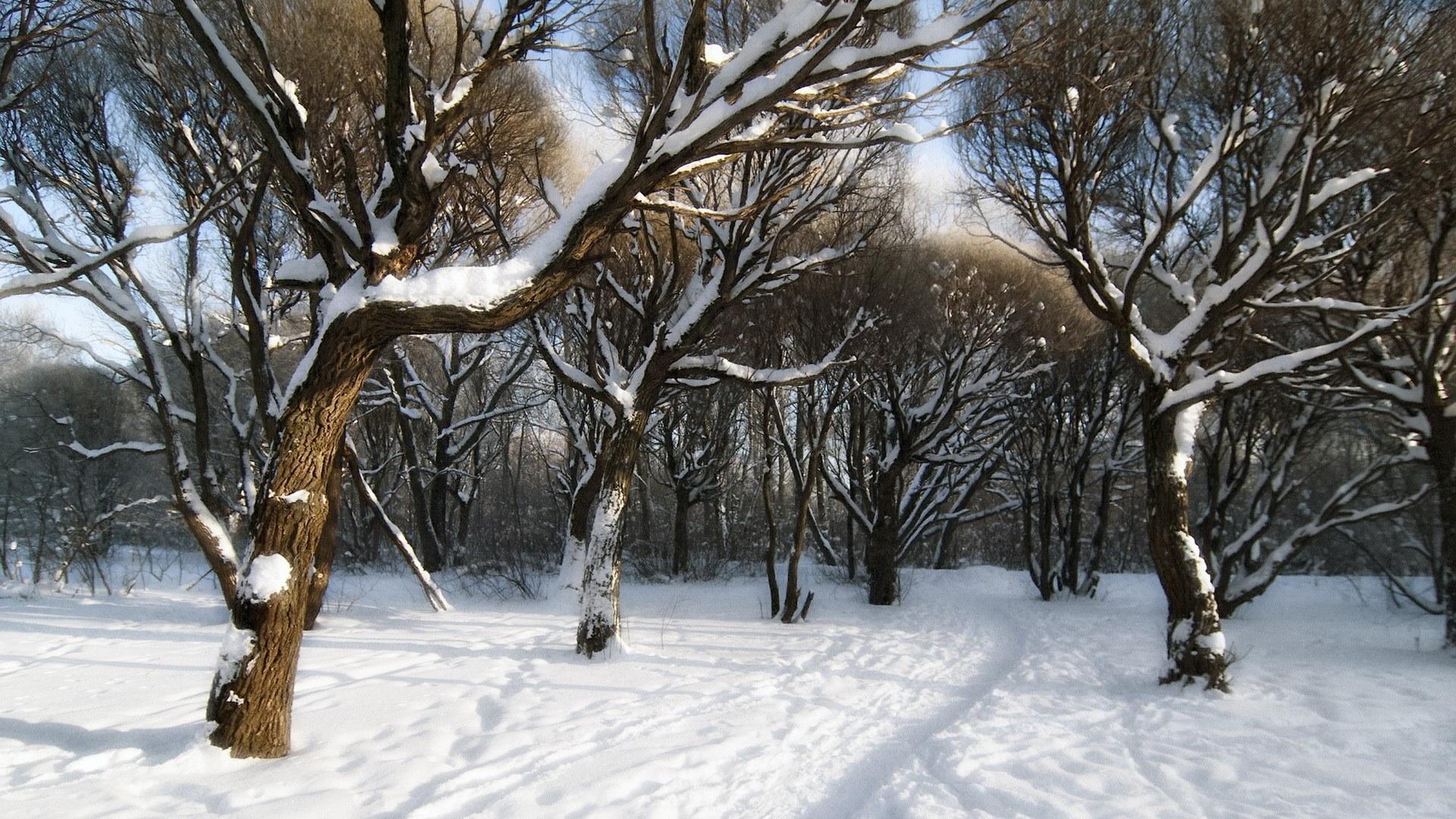 Snow forest wallpaper desktop wallpapersafari for Sfondi paesaggi invernali per desktop