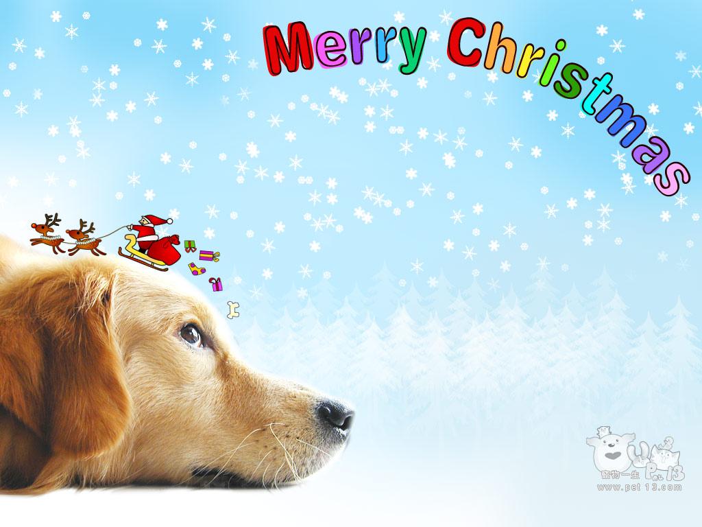 Download Christmas Dog Wallpaper [1024x768] 74 Christmas Dog 1024x768