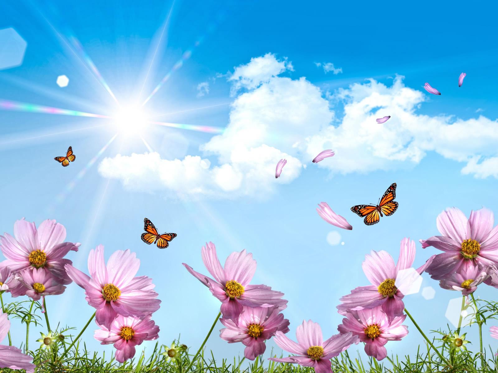The Best Summer Desktop HD Wallpaper Nature Wallpapers 1600x1200