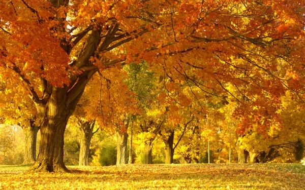 autumn leaves 1440x900 wallpaper Autumn Wallpapers Desktop 600x375