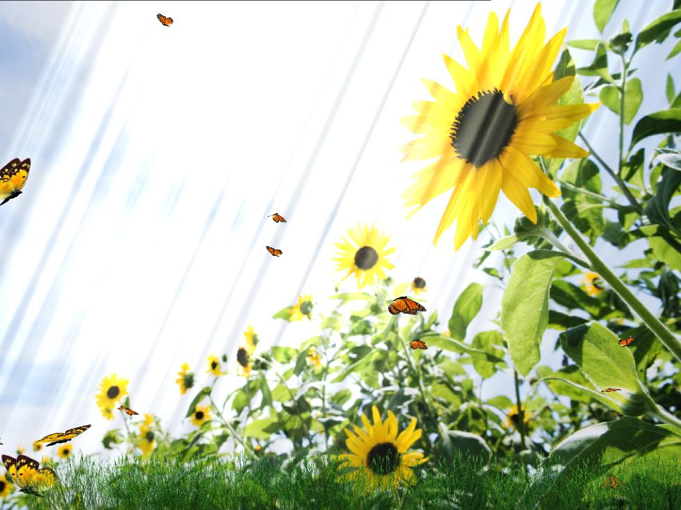 Animated Butterfly Backgrounds Beautiful butterfly animated 980x734