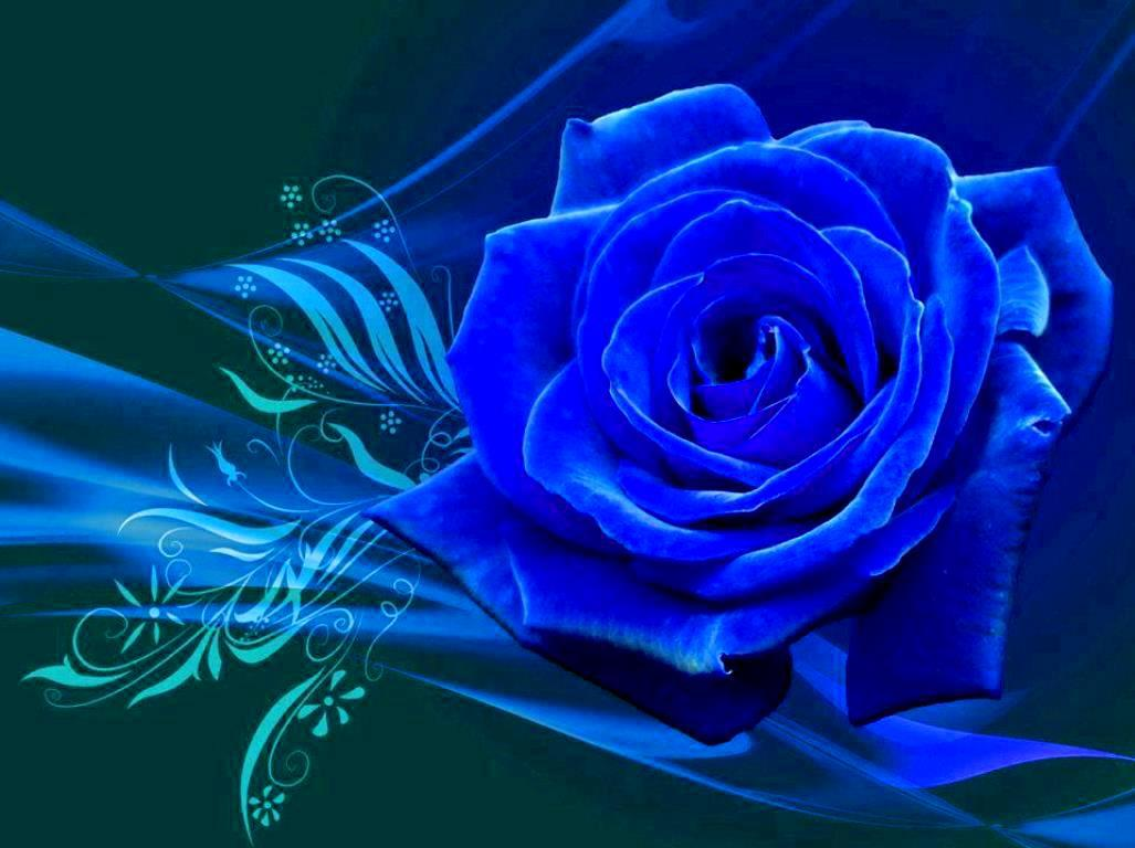 Blue rose wallpaper wallpapersafari - Blue rose hd wallpaper download ...