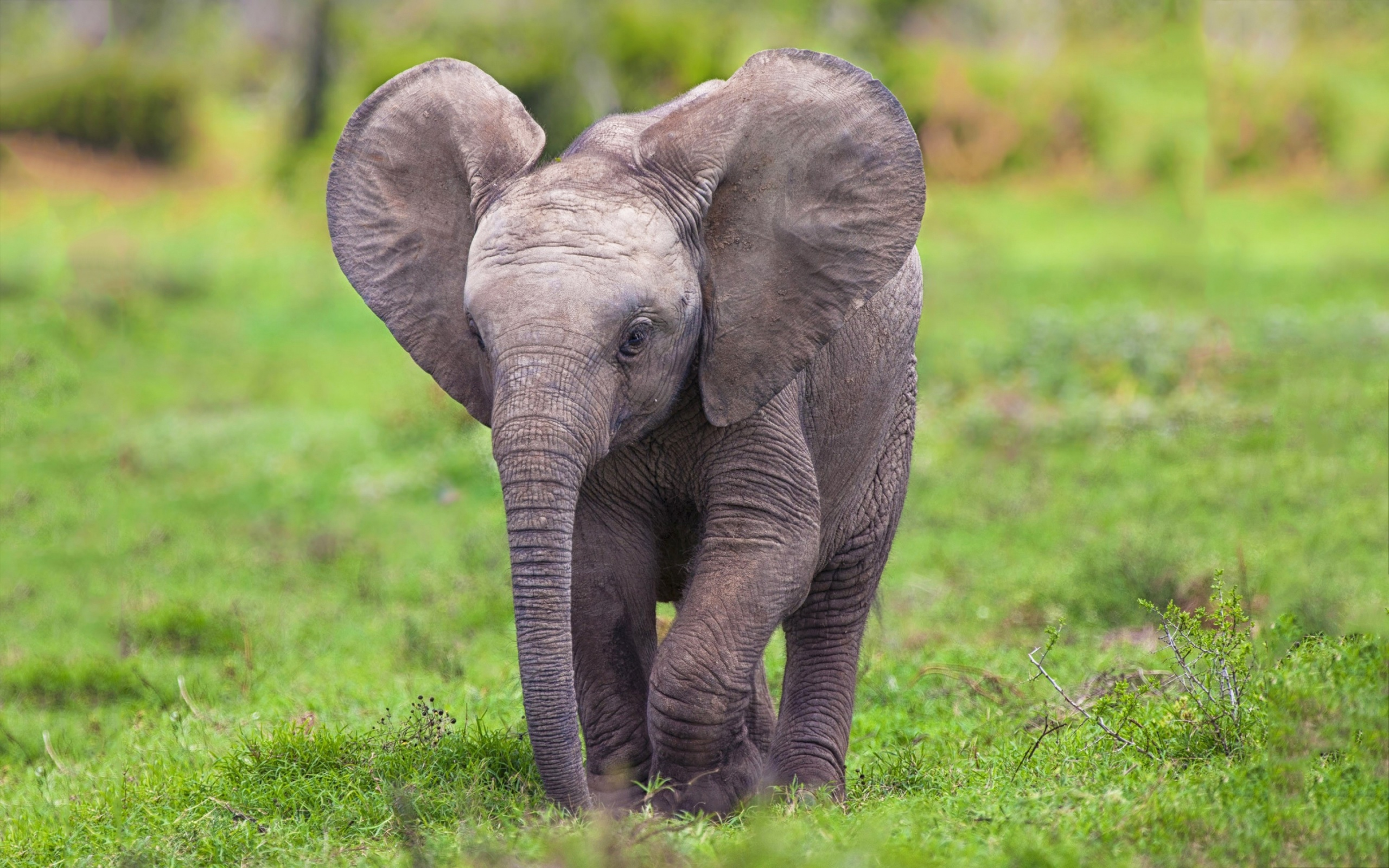 Baby elephant wallpapers Baby Animals 2560x1600