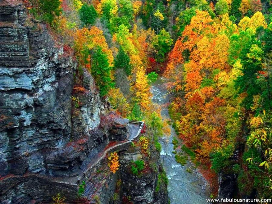 fabulous nature desktop wallpaper   wwwwallpapers in hdcom 900x675