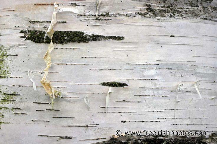 Close up of bark on a Silver Birch Tree Beata Pinterest 736x488