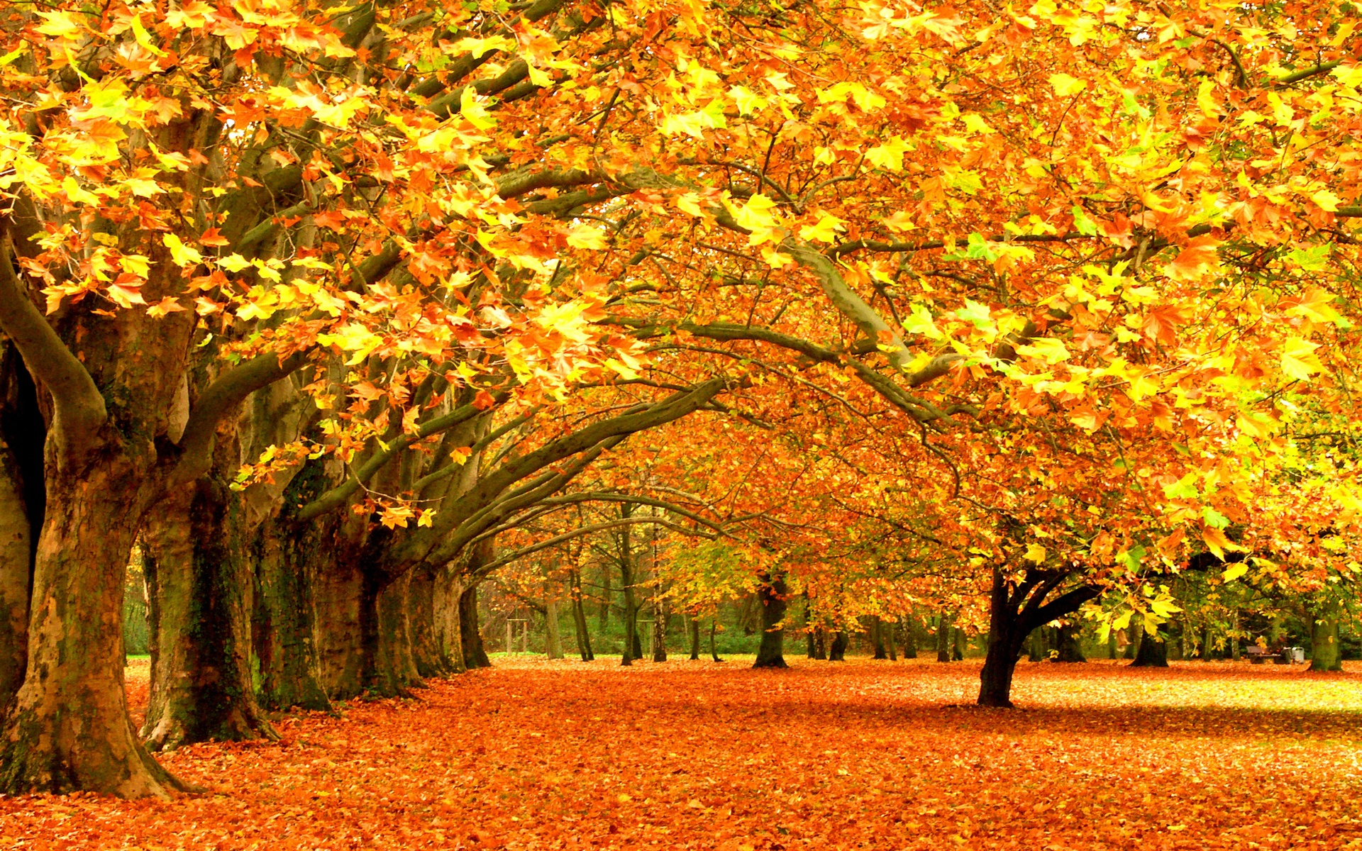 Wallpapers autumn leaf fall leaves trees desktop HD Desktop 1920x1200