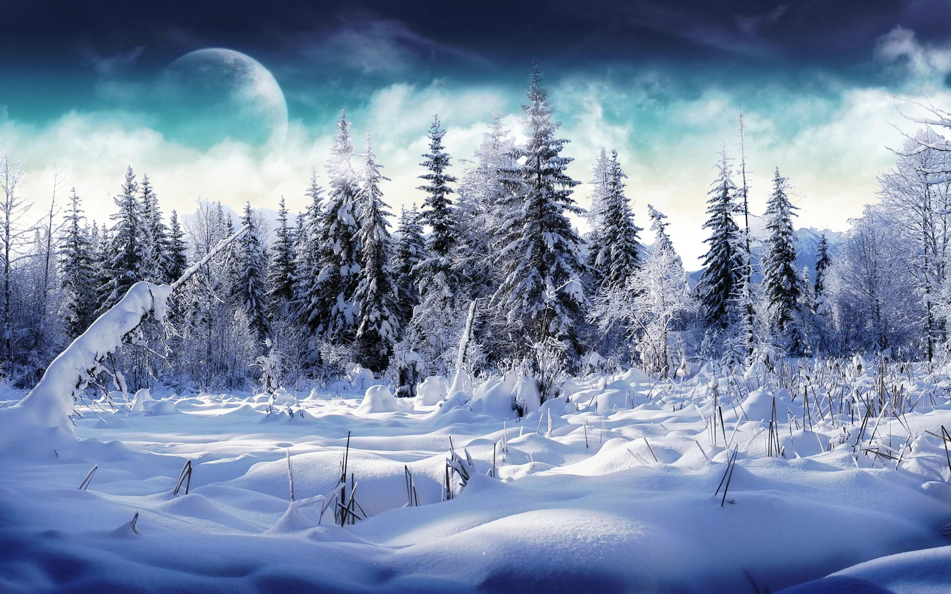 Winter Snowy forest 1920x1200 hd wallpaper High Definition Wallpapers 1920x1200