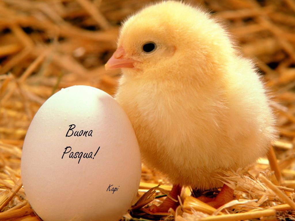 Cute And Colorful Easter Wallpapers   webexpedition18 1024x768