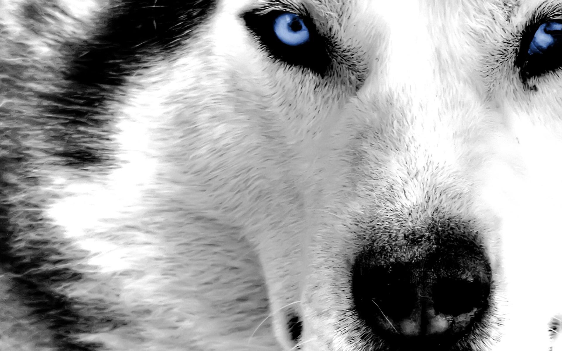 Really Cool Wolf Wallpapers - WallpaperSafari